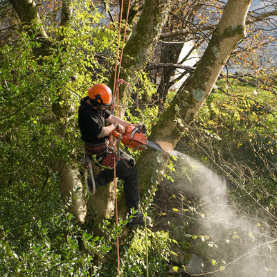 Employee in safety gear up in a tree cutting large branches for a customer in Racine, WI